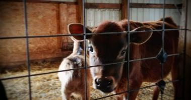 Bauman's Farm: Gervais, Oregon