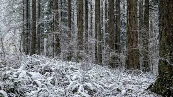 Silver Falls State Park: Oregon